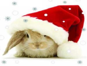 christmas-bunny